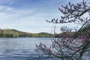 Spring flowers by Radnor Lake